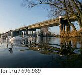 Купить «Лебеди под мостом», фото № 696989, снято 7 февраля 2009 г. (c) Андрей Рыбачук / Фотобанк Лори