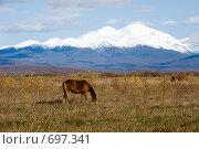 Купить «Табун лошадей на пастбище», фото № 697341, снято 9 октября 2008 г. (c) Ирина Игумнова / Фотобанк Лори