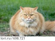 Купить «Рыжий кот», фото № 698721, снято 30 апреля 2008 г. (c) Игорь Шаталов / Фотобанк Лори