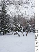 Раскидистое дерево. Стоковое фото, фотограф Антон Тимохин / Фотобанк Лори