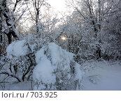 Деревья в снегу. Стоковое фото, фотограф Голов Евгений Эдуардович / Фотобанк Лори
