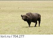 Купить «Африканский буйвол в национальном парке. Африка», фото № 704277, снято 6 января 2009 г. (c) Алексей Зарубин / Фотобанк Лори