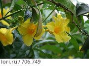 Желтые цветы. Стоковое фото, фотограф Ольга Морозова / Фотобанк Лори