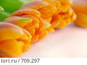 Купить «Тюльпаны», фото № 709297, снято 2 февраля 2009 г. (c) Наталья Щербань / Фотобанк Лори