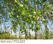 Молодо-зелено. Стоковое фото, фотограф Нина Галкина / Фотобанк Лори