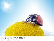 Купить «Божья коровка на цветке», фото № 714097, снято 9 июля 2007 г. (c) Анатолий Типляшин / Фотобанк Лори