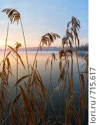 Купить «Тростник в лучах восходящего солнца морозным утром», фото № 715617, снято 21 февраля 2009 г. (c) Андрей Рыбачук / Фотобанк Лори