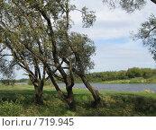 У реки. Стоковое фото, фотограф Владимир Далецкий / Фотобанк Лори