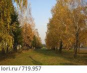 Осень золотая. Стоковое фото, фотограф Владимир Далецкий / Фотобанк Лори