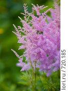 Купить «Цветок», фото № 720185, снято 27 июля 2008 г. (c) Биржанова Юлия / Фотобанк Лори