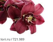 Орхидея. Стоковое фото, фотограф ФЕДЛОГ / Фотобанк Лори