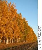 Осенние березы. Стоковое фото, фотограф Грубова Наталья / Фотобанк Лори