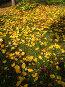 Осенние листья, фото № 723621, снято 2 октября 2006 г. (c) ИВА Афонская / Фотобанк Лори