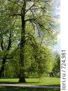 Купить «Весенняя липа в парке», фото № 724981, снято 14 мая 2007 г. (c) Солодовникова Елена / Фотобанк Лори