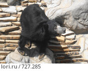 Медведь. Стоковое фото, фотограф Ольга Дарьина / Фотобанк Лори