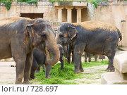 Слоны едят траву. Стоковое фото, фотограф Сергей Яковлев / Фотобанк Лори