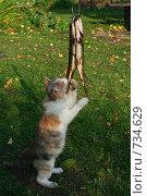 Купить «Кошка ворует пойманную рыбу», фото № 734629, снято 5 октября 2008 г. (c) Дмитрий Земсков / Фотобанк Лори