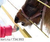 Купить «Поедание яблок», фото № 734993, снято 24 февраля 2009 г. (c) Оля Косолапова / Фотобанк Лори