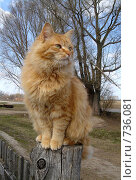 Купить «Кот», фото № 736081, снято 30 апреля 2006 г. (c) Ткачёва Юлия Алексеевна / Фотобанк Лори