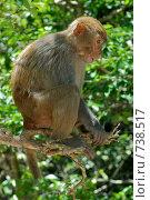 Купить «Думающая обезьяна», фото № 738517, снято 4 мая 2008 г. (c) Игорь Никитенко / Фотобанк Лори