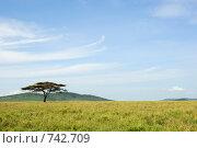 Купить «Одинокая акация в африканской саванне», фото № 742709, снято 23 января 2008 г. (c) Знаменский Олег / Фотобанк Лори