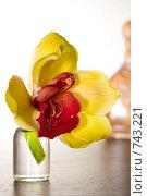 Купить «Орхидея на столе», фото № 743221, снято 10 марта 2009 г. (c) Алексей Байдин / Фотобанк Лори
