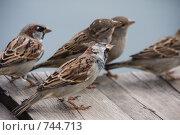 Купить «Любопытные птицы воробьи», фото № 744713, снято 3 сентября 2008 г. (c) Фадеева Марина / Фотобанк Лори