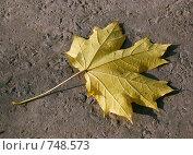Купить «Осенние Ноты: Один», фото № 748573, снято 5 октября 2008 г. (c) Иван Авдеев / Фотобанк Лори