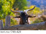 Козел с большими рогами за забором на ферме. Стоковое фото, фотограф Ирина Рубанова / Фотобанк Лори