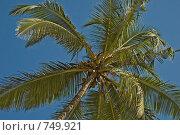 Купить «Пальма на фоне синего неба», фото № 749921, снято 26 декабря 2007 г. (c) Ирина Доронина / Фотобанк Лори