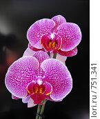 Купить «Ярко-розовая орхидея», фото № 751341, снято 10 марта 2009 г. (c) Мария Николаева / Фотобанк Лори