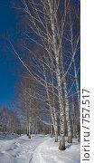 Купить «Зимний пейзаж», фото № 757517, снято 14 марта 2009 г. (c) Юрий Бельмесов / Фотобанк Лори