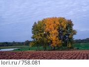 Купить «Корова на краю леса и пахотной земли», фото № 758081, снято 27 сентября 2007 г. (c) Aleksander Kaasik / Фотобанк Лори