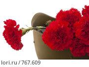 Купить «Красные гвоздики», фото № 767609, снято 27 февраля 2009 г. (c) Лисовская Наталья / Фотобанк Лори
