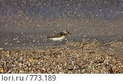 Купить «Птица на пляже», фото № 773189, снято 15 августа 2018 г. (c) Евгений Шелковников / Фотобанк Лори