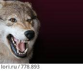 Купить «Волк на черном фоне», фото № 778893, снято 18 февраля 2019 г. (c) Losevsky Pavel / Фотобанк Лори