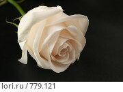 Купить «Белая роза на черном фоне», фото № 779121, снято 25 марта 2019 г. (c) Losevsky Pavel / Фотобанк Лори
