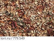 Листья рябины. Стоковое фото, фотограф Лукьянов Иван / Фотобанк Лори