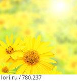 Купить «Цветы, освещенные солнцем», фото № 780237, снято 21 февраля 2019 г. (c) Лукиянова Наталья / Фотобанк Лори