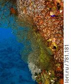 Купить «Коралловый риф. Подводная съемка.», фото № 781181, снято 21 ноября 2008 г. (c) Мельников Дмитрий / Фотобанк Лори