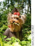 Купить «Собака», фото № 781937, снято 7 июля 2008 г. (c) Верещагина Дарья / Фотобанк Лори