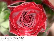 Купить «Роза», фото № 782101, снято 8 марта 2001 г. (c) Робул Дмитрий / Фотобанк Лори