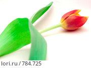 Купить «Тюльпан на белом фоне», фото № 784725, снято 19 августа 2018 г. (c) Юрий Винокуров / Фотобанк Лори