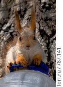 Белка. Стоковое фото, фотограф Возмилова Светлана / Фотобанк Лори