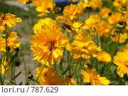 Жёлтые цветы. Стоковое фото, фотограф Дмитрий Левченко / Фотобанк Лори