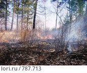 Горит сухая трава в лесу. Стоковое фото, фотограф Шумилов Владимир / Фотобанк Лори