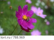 Цветок на поляне. Стоковое фото, фотограф Дмитрий Левченко / Фотобанк Лори