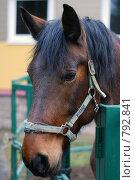 Купить «Лошадь», фото № 792841, снято 16 ноября 2008 г. (c) Вячеслав Торопов / Фотобанк Лори