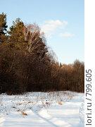 Купить «Скоро весна», фото № 799605, снято 14 марта 2009 г. (c) Петров Алексей / Фотобанк Лори