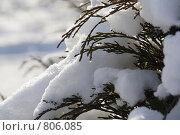 Снег искрится. Стоковое фото, фотограф Дмитрий Левченко / Фотобанк Лори